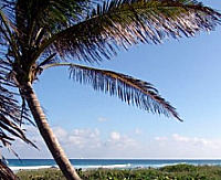 Bahamas Beach and Palm