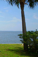 West Coast with Palm