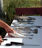 Cleaning Fish in St. Augustine Beach