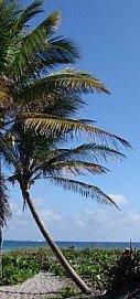 Palm on Deserted Beach