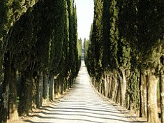 Italy Tree Lined Road